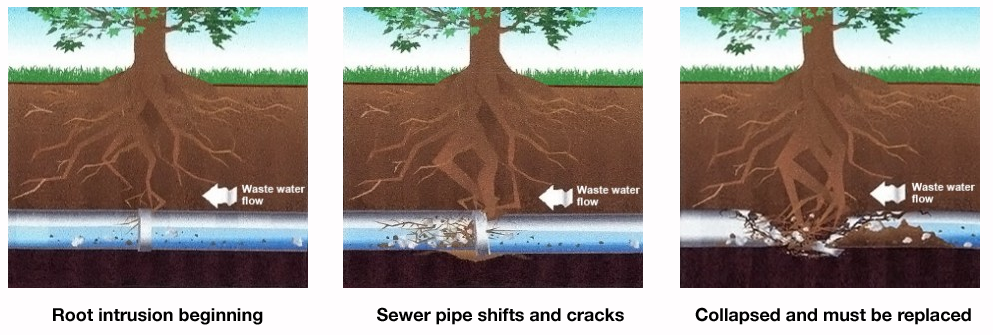 Sewer and Drain Cleaning San Luis Obispo